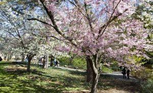 Vườn bách thảo Brooklyn ở New York